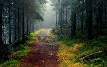 forin DIY Personalisierte Bild Puzzle Wald Baum