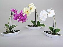 Formano Orchidee im Schiffchen pink grün weiß