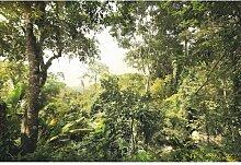 Fototapete 248 cm L x 368 cm B Dschungel Komar
