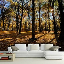 Fototapete 3D 350cmx250cm Herbstwald Vlies