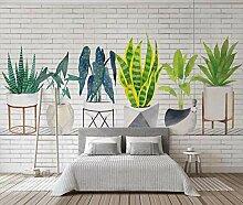 Fototapete 3D Effekt Grüne Topfpflanze Mit