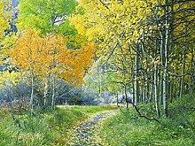 Fototapete 3D Effekt Tapete Herbstwaldlandschaft