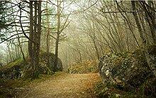Fototapete 3D Effekt Waldmorgennebelpfad