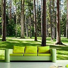 Fototapete 3D Grüne Wälder 3D Wandbilder Für