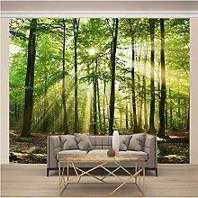 Fototapete 3D Grünes Waldsonnenlicht 450x350cm
