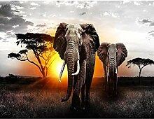 Fototapete Afrika Elefant 528 x 280 cm - Vlies