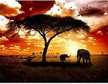 Fototapete Afrika Elefanten Vlies Wand Tapete