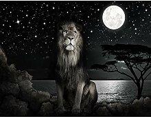 Fototapete Afrika Löwe - Vlies Wand Tapete