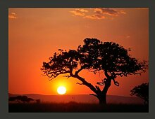 Fototapete Afrika: Sonnenuntergang 154 cm x 200 cm
