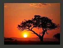 Fototapete Afrika: Sonnenuntergang 231 cm x 300 cm