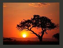 Fototapete Afrika: Sonnenuntergang 309 cm x 400 cm
