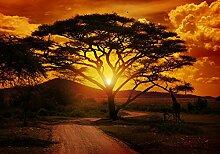 Fototapete Afrika Sonnenuntergang Gitaffe Orange