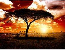 Fototapete Afrika Sonnenuntergang Vlies Wand