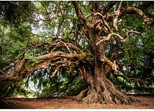 Fototapete Baum 2.9 m x 416 cm