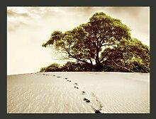 Fototapete Baum in der Wüste 193 cm x 250 cm