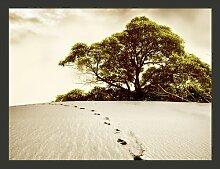 Fototapete Baum in der Wüste 231 cm x 300 cm