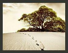 Fototapete Baum in der Wüste 270 cm x 350 cm