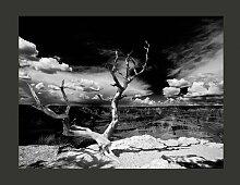 Fototapete Baum mit Grand Canyon im Hintergrund