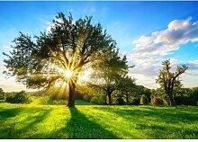 Fototapete Baum Sonne 1.84 m x 254 cm