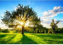 Fototapete Baum Sonne 2.19 m x 312 cm