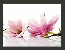 Fototapete Bezaubernde Magnolia im Großformat 309