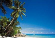 Fototapete Bildtapete Motivtapete - National Geographic Escape - 8-teilig - Palme, Strand, Meer, Karibik, Malediven - Größe: 368 x 254 cm - Lieferung inkl. Tapetenleim