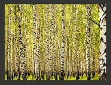 Fototapete Birkenwald 154 cm x 200 cm