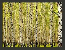 Fototapete Birkenwald 231 cm x 300 cm