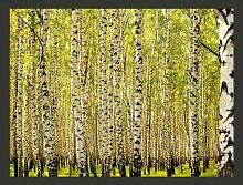 Fototapete Birkenwald 309 cm x 400 cm