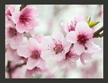 Fototapete Blühende Kirschblüte (rosa Blümchen)