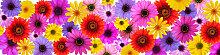 Fototapete Blumen 141246182