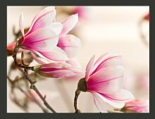 Fototapete Branch of magnolia Tree 154 cm x 200 cm