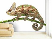 Fototapete Chameleon - weitere Größen und