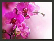 Fototapete Delikate Orchidee in Pink 154 cm x 200