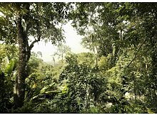 Fototapete Dschungel 250 cm L x 350 cm B Komar