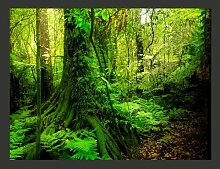 Fototapete Dschungel 270 cm x 350 cm East Urban