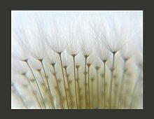 Fototapete Ein Wald aus Pusteblumen 270 cm x 350 cm