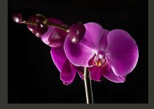 Fototapete elegant Orchidee 193 cm x 250 cm East