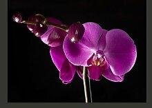 Fototapete elegant Orchidee 309 cm x 400 cm East