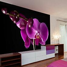 Fototapete elegant Orchidee cm 300x231 Artgeist