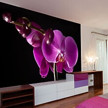 Fototapete - elegant  Orchidee