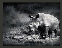 Fototapete Entrücktes Nashorn 309 cm x 400 cm