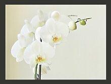 Fototapete Ewige Eleganz: Weiße Orchidee 193 cm x