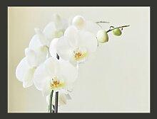 Fototapete Ewige Eleganz: Weiße Orchidee 231 cm x