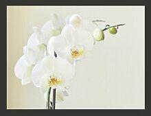 Fototapete Ewige Eleganz: Weiße Orchidee 309 cm x