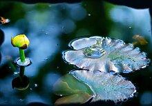 Fototapete Frosch auf Seerosenblatt, gelbe