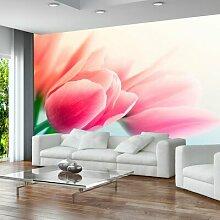Fototapete Frühling und Tulpen 231 cm x 300 cm