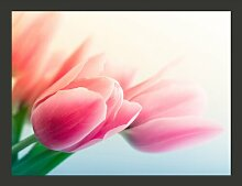 Fototapete Frühling und Tulpen 309 cm x 400 cm