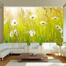 Fototapete - Frühlingsweide mit Gänseblümchen