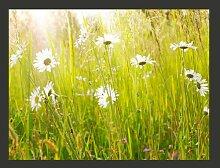Fototapete Frühlingsweide mit Gänseblumen 193 cm